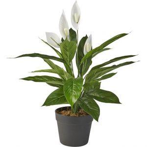 Kunstplant Spatiphyllum H60cm - HTT Decorations