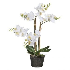 Kunstplant Orchidee / Phalaenopsis mini 3-tak wit H38cm - HTT Decorations