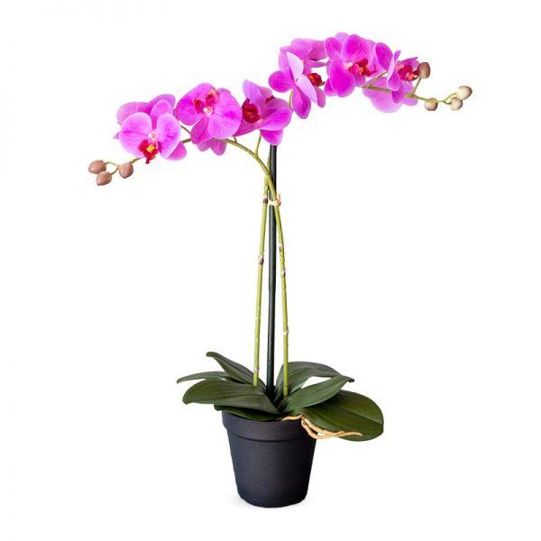 Kunstplant Orchidee / Phalaenopsis 2-tak roze H53cm - HTT Decorations