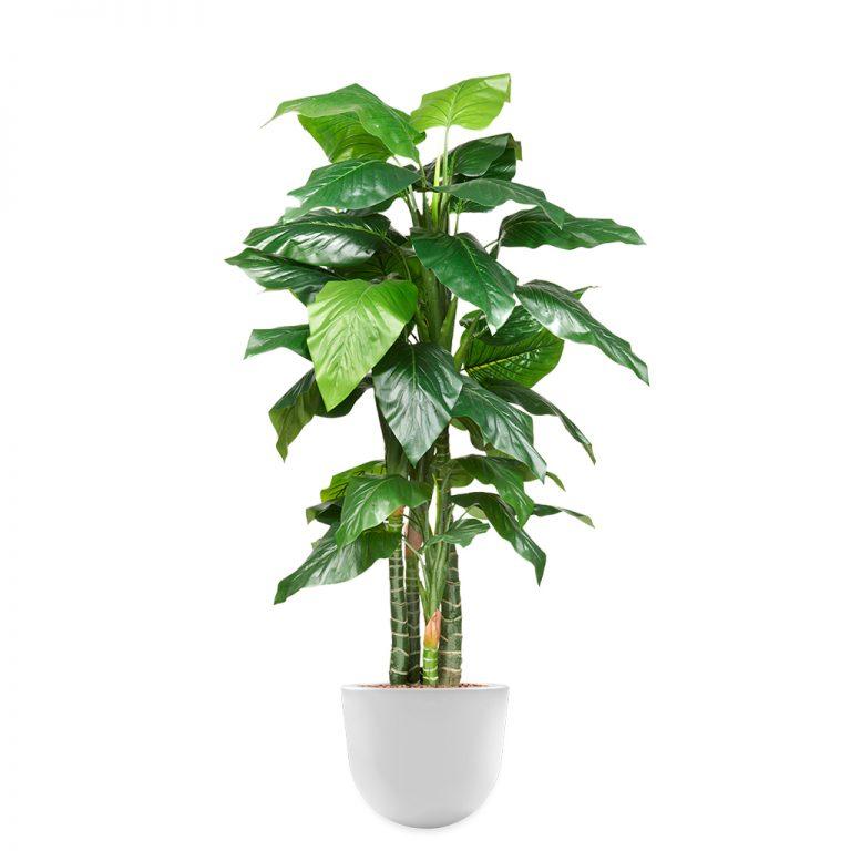 HTT - Kunstplant Philodendron in Eggy wit H185 cm - kunstplantshop.nl