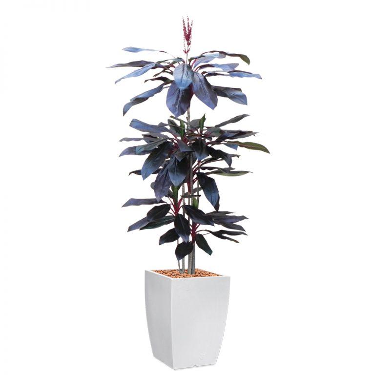 HTT - Kunstplant Cordyline rood in Genesis vierkant wit H220 cm - kunstplantshop.nl
