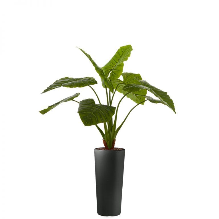 HTT - Kunstplant Philodendron in Clou rond antraciet H165 cm - kunstplantshop.nl