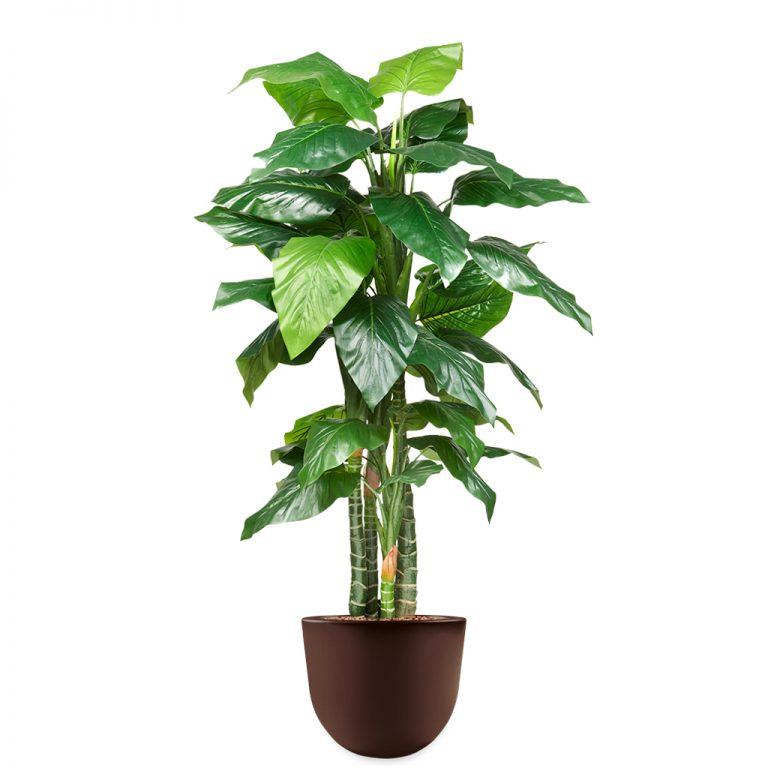 HTT - Kunstplant Philodendron in Eggy bruin H185 cm - kunstplantshop.nl