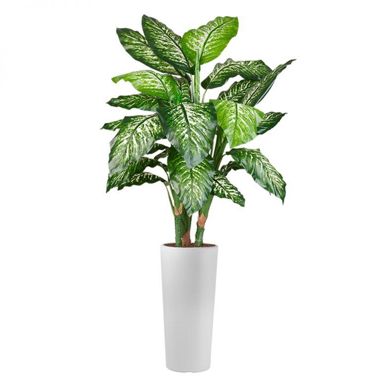 HTT - Kunstplant Dieffenbachia in Clou rond wit H185 cm - kunstplantshop.nl