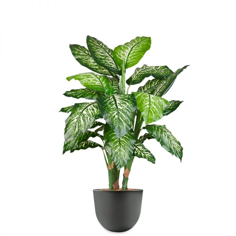 HTT - Kunstplant Dieffenbachia in Eggy antraciet H130 cm - kunstplantshop.nl