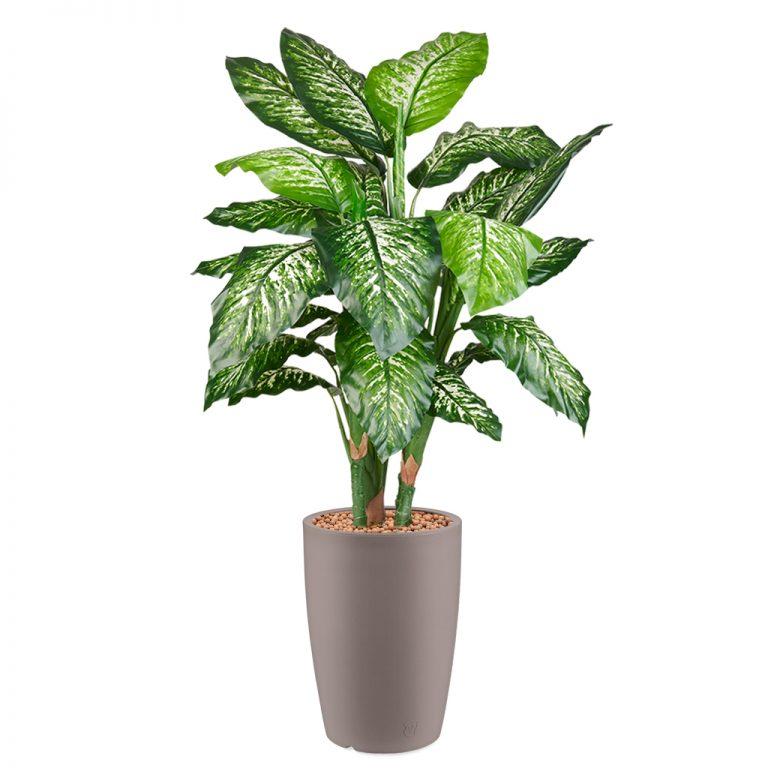 HTT - Kunstplant Dieffenbachia in Genesis rond taupe H150 cm - kunstplantshop.nl