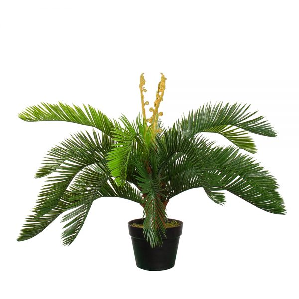 Kunstplant Cycas revoluta H60cm - HTT Decorations
