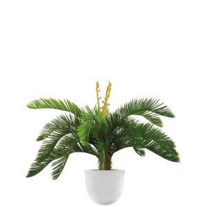 HTT - Kunstplant Cycas in Eggy wit H70 cm - kunstplantshop.nl