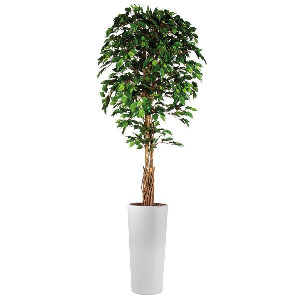 Kunstplant Ficus in Clou rond wit H250 cm - HTT Decorations