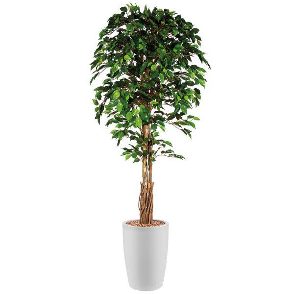 HTT - Kunstplant Ficus in Genesis rond wit H210 cm - kunstplantshop.nl