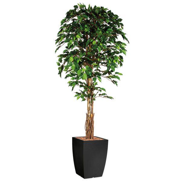 HTT - Kunstplant Ficus in Genesis vierkant antraciet H210 cm - kunstplantshop.nl