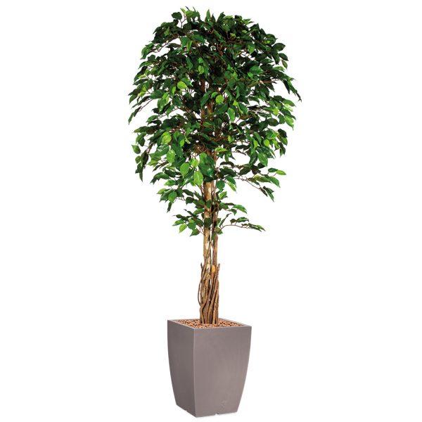HTT - Kunstplant Ficus in Genesis vierkant taupe H210 cm - kunstplantshop.nl