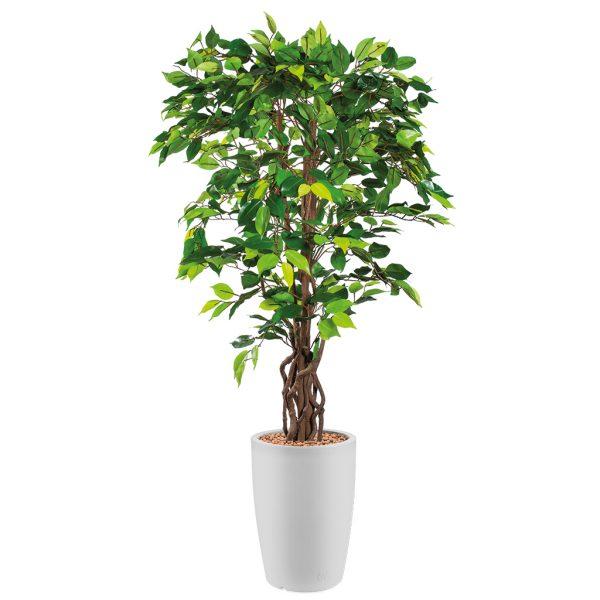 HTT - Kunstplant Ficus in Genesis rond wit H165 cm - kunstplantshop.nl