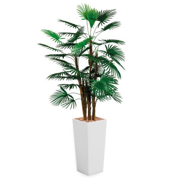 HTT - Kunstplant Rhapis palm in Clou vierkant wit H185 cm - kunstplantshop.nl