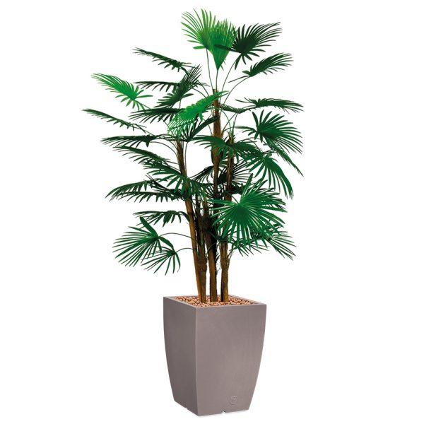 HTT - Kunstplant Rhapis palm in Genesis vierkant taupe H150 cm - kunstplantshop.nl