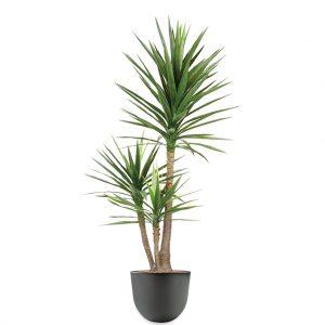 HTT - Kunstplant Yucca in Eggy antraciet H175 cm - kunstplantshop.nl