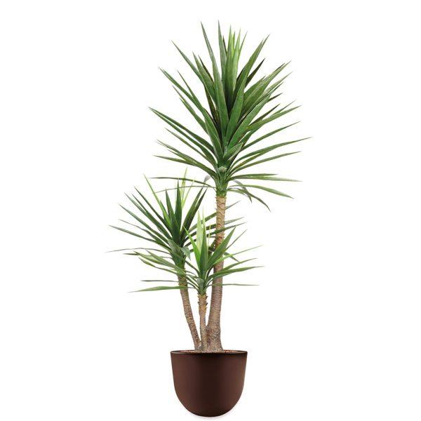 HTT - Kunstplant Yucca in Eggy bruin H175 cm - kunstplantshop.nl