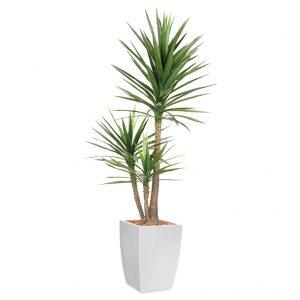 HTT - Kunstplant Yucca in Genesis vierkant wit H200 cm - kunstplantshop.nl