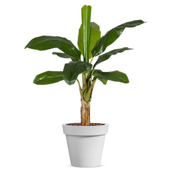 Kunstplant Bananenplant in Easy wit H140cm - HTT Decorations